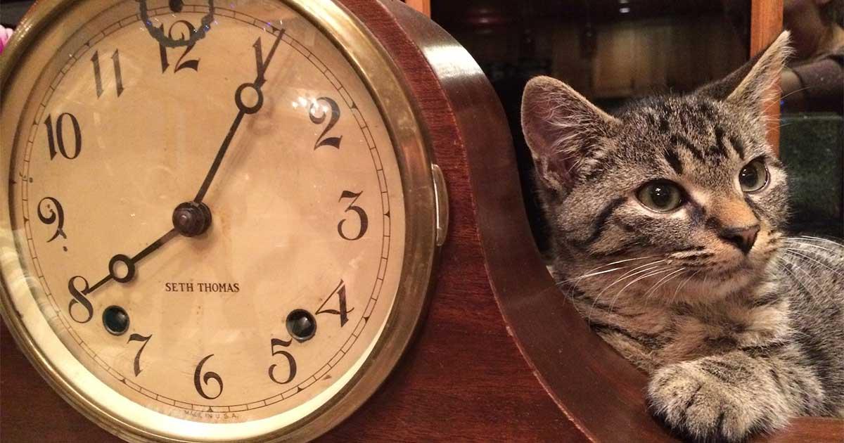 котка и часовник